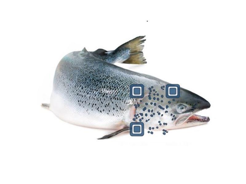 Biometrisk individidentifikasjon av laks er vist mulig og kan brukes til å identifisere laks ved hjelp av prikkemønster