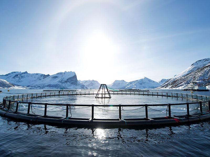 FHF sammen med Forskningrådet iverksatte prosjekt SALCOD, med den hensikt å øke kunnskapen og kartlegge hvordan lakseoppdrett påvirker torsken