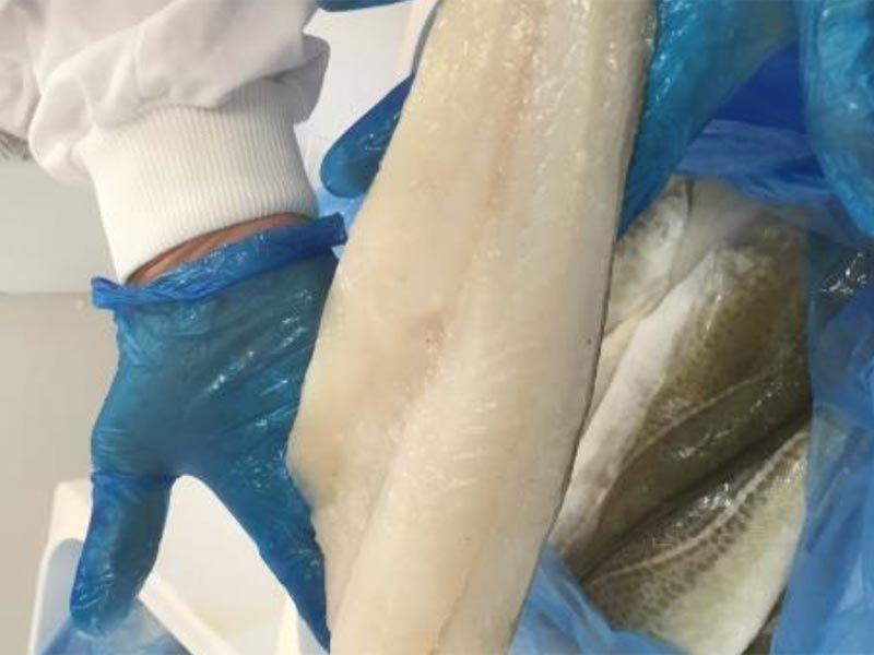 Blankpakking om bord i 21m kystfiskefartøy med nedskalerte kjøleskruer fra laksenæringen ga 30-40% merverdi på fiskeråstoffet