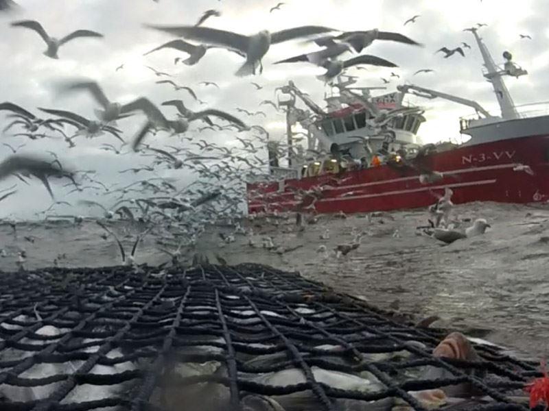 Det er utviklet en første fase i en norsk standard for bærekraftig fiskeri